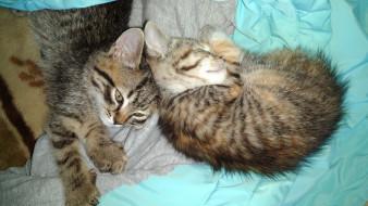 животные, коты, котята