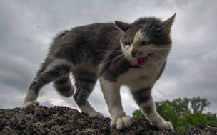 животные, коты, кошка, котёнок