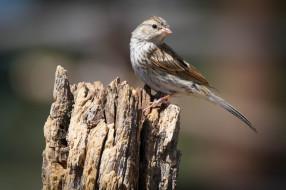 животные, птицы, птичка