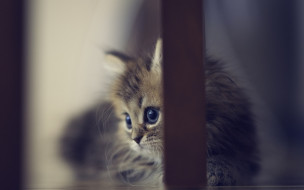 животные, коты, ножка, котенок