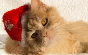 животные, коты, мордочка, взгляд, кот, кошка