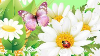бабочки, цветы