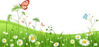 трава, цветы