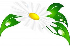 лепестки, капли, фон, ромашка, листья