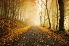 деревья, пейзаж, Осень, дорога, лес