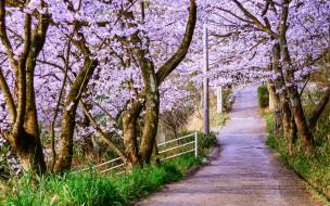 дорожка, аллея, весна, цветение, деревья