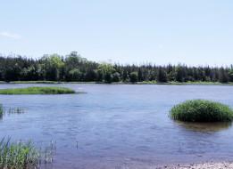 река, лето, трава, деревья