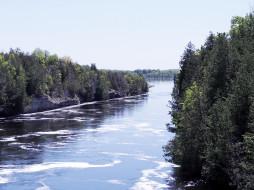 деревья, лето, река