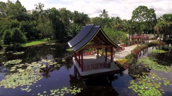 пагода, водоем, лилии, пальмы