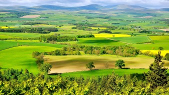 поля, луга, горы