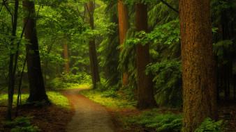 деревья, тропинка