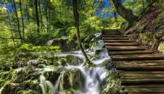 потоки, вода, деревья, ступеньки