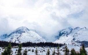 туман, снег, вершины, елки