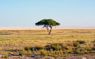 трава, саванна, дерево