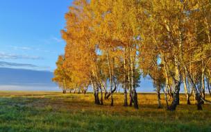 небо, трава, березы, осень