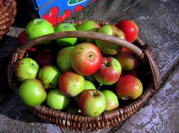 корзинка, яблоки, урожай