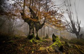 обои для рабочего стола 2048x1323 природа, лес, деревья
