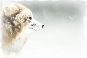 лиса, акварель, снег