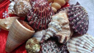 обои для рабочего стола 1920x1080 разное, ракушки,  кораллы,  декоративные и spa-камни