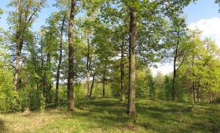 обои для рабочего стола 1920x1164 природа, лес, деревья