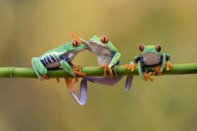 животные, лягушки, природа, фон, лягушка
