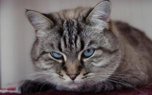 животные, коты, кот, кошка, взгляд, портрет