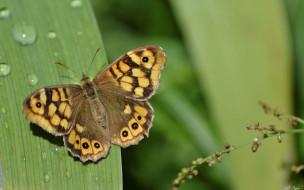 животные, бабочки,  мотыльки,  моли, природа, бабочка, макро