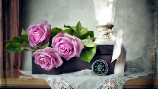цветы, розы, композиция
