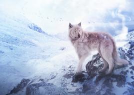 by Fiirewolf, снег, волк, горы