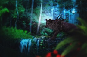 волк, by Fiirewolf, фэнтези, лес, природа