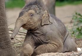 животные, слоны, большой, красивый, хобот, слон