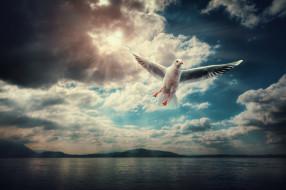 животные, Чайки,  бакланы,  крачки, полет, чайка