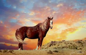 животные, лошади, грива, окрас, лошадь