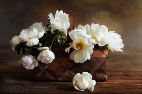 цветы, пионы, цвет, лепестки, цветение, пион