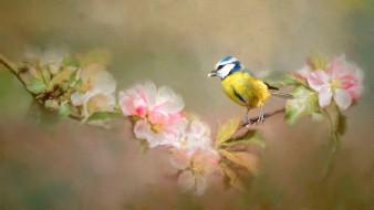 рисованное, животные, цветы, арт, птичка, листья, рисунок, цветение, синица, ветка, размытый, яблоня, нежно, фон, живопись, синичка, мазки, птица, мило, весна
