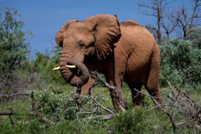 животные, слоны, слон