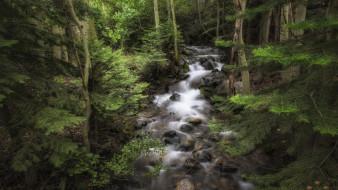 природа, лес, речка
