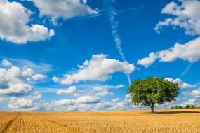 облака, дерево, небо, поле