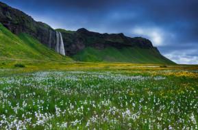 Исландия, скалы, цветы, трава, водопад