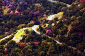 панорама, дорога, деревья, серпантин