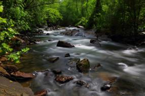 природа, реки, озера, лес, деревья, вода, река, поток