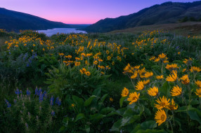 природа, луга, горы, цветение, цветы, луг
