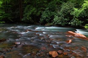 природа, реки, озера, поток, деревья, река, вода