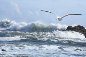 рисованное, животные, море, птица, чайка