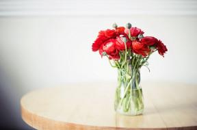 ранункулюс, цветы, бутоны, букет, азиатский лютик, ранункулюсы