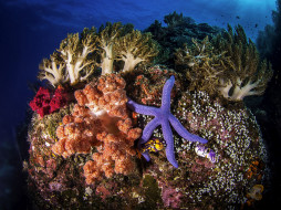 море, морская звезда, кораллы