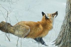 арт, зима, Robert Bateman, лиса, лес, снег