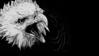 голова, орел, черный фон