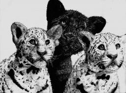 рисованное, животные, трое, леопард