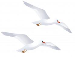 чайки, полет